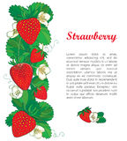 Vector template with outline Strawberry, vertical border with ornate red berry, flower and green leaves  on white. Stock Images
