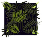 Vector template with tropical leaves. Leaves palm tree illustration. Modern graphics. Stock Images