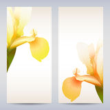 Vector templates iris graphic designs. Royalty Free Stock Photography