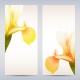 Vector templates iris graphic designs. Vector templates flowers graphic designs. Birthday or invitation card Royalty Free Stock Photography