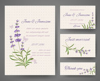 Vector templates with lavender bunches Royalty Free Stock Image