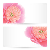 Vector templates peonies graphic designs. Vector templates flowers graphic designs. Birthday or invitation card Stock Photography