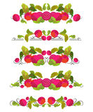 Vector text dividers with beetroot and leaves in origami style Stock Photography