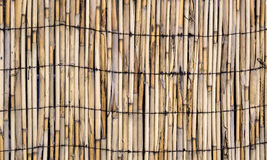 Vector texture of wall of bound bamboo Stock Photo