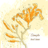 Vector textured background with lily. Vector textured background with with three lily on yellow paper Stock Photography