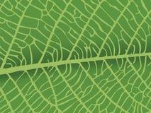 Vector textuur van blad Royalty-vrije Stock Foto