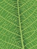 Vector textuur van blad Stock Afbeelding