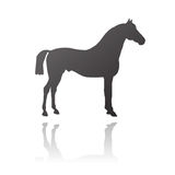 Vector thoroughbred horse. Used for races and championships, also known as purebred horse Royalty Free Stock Image