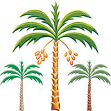 vector Three date palm trees Stock Photography