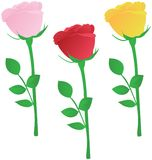 Vector three multicolored roses. Pink, red and yellow Stock Image