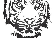 Vector tiger. Black vector tiger on white background Stock Images