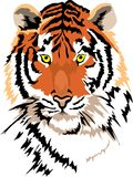 Vector tiger Stock Images