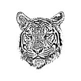 Vector of a tiger face on white background. Stock Photography