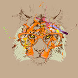 Vector tiger  glasses drawing, illustration. Vector tiger hipster glasses drawing, illustration Royalty Free Stock Photos