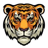 Tiger head. Vector of tiger head in complex and detailed style vector illustration
