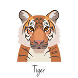 Vector tiger head isolated. Flat style, cartoon object Stock Images