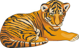 Vector tiger. Stock Photography