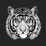 Vector tiger for tattoo, sport logo, t-shirt, poster Stock Image