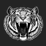 Vector tiger for tattoo, sport logo, t-shirt, poster Stock Photography