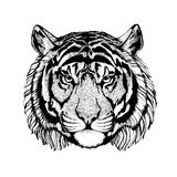 Vector tiger for tattoo, sport logo, t-shirt, poster Stock Photos