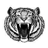 Vector tiger for tattoo, sport logo, t-shirt, poster Stock Images
