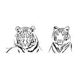 Vector tigers head Stock Images