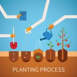 Vector timeline infographic concept of planting process Stock Images