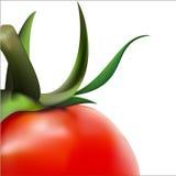 Vector tomaten Stock Afbeeldingen