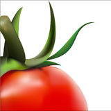 Vector tomatoes. A close-up detail of tomatoes in vector Stock Images