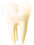 Vector tooth Stock Images