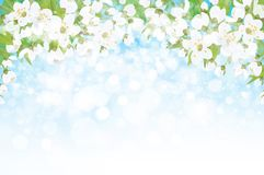 Vector tot bloei komende takken van appelboom stock illustratie