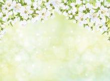 Vector tot bloei komende takken van appelboom vector illustratie