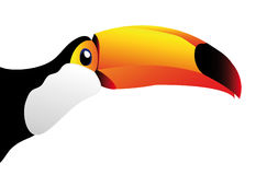 Vector toucan isolated on white background Stock Photos