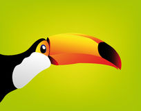 Vector toucan isolated on white background Royalty Free Stock Photos
