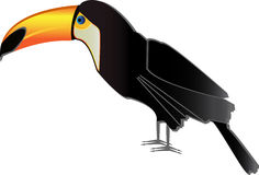 Vector toucan. Simple illustration of toucan bird Royalty Free Stock Images
