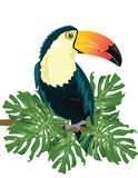 Vector Toucan sitting on tree branch Stock Photography
