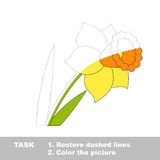 Vector trace game. Narcissus to be colored. Stock Images