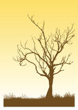 Vector Tree Stock Photography