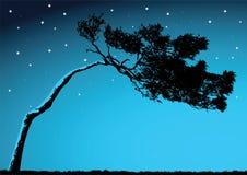 Vector Tree Stock Image