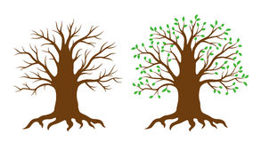 Vector tree. Tree with and without leaves. EPS8 stock illustration
