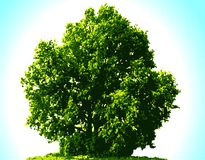 Vector tree Royalty Free Stock Photo