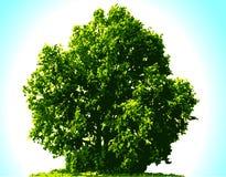 Vector tree vector illustration