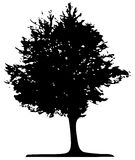 Vector tree Stock Photos