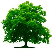 Vector tree. On white background Royalty Free Stock Photography