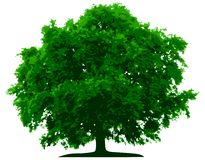Vector tree Stock Photo