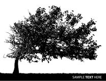 Vector Tree Royalty Free Stock Photography