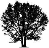 Vector tree Royalty Free Stock Image