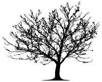 Free Vector Tree Royalty Free Stock Image - 8475406
