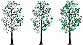 Vector Tree Stock Images