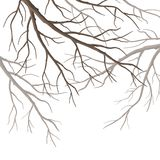 Vector Tree Branches Royalty Free Stock Photos